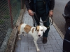 Ztraceny pes Brtnice